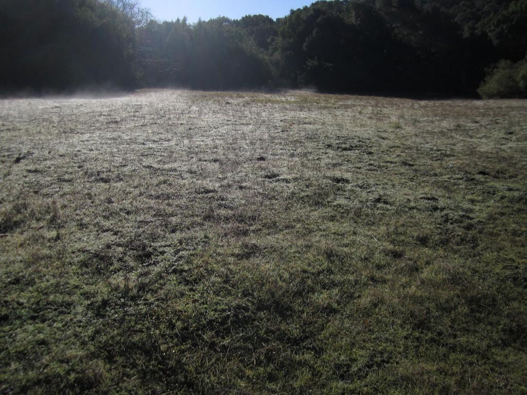 Midden Meadow