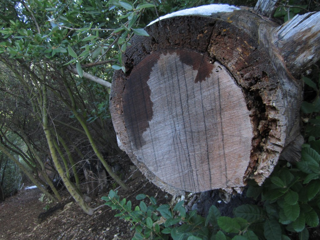 the work of a cross-cut saw