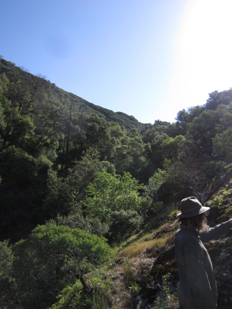 South Fork trail, Sam looking back in the direction of Strawberry Valley