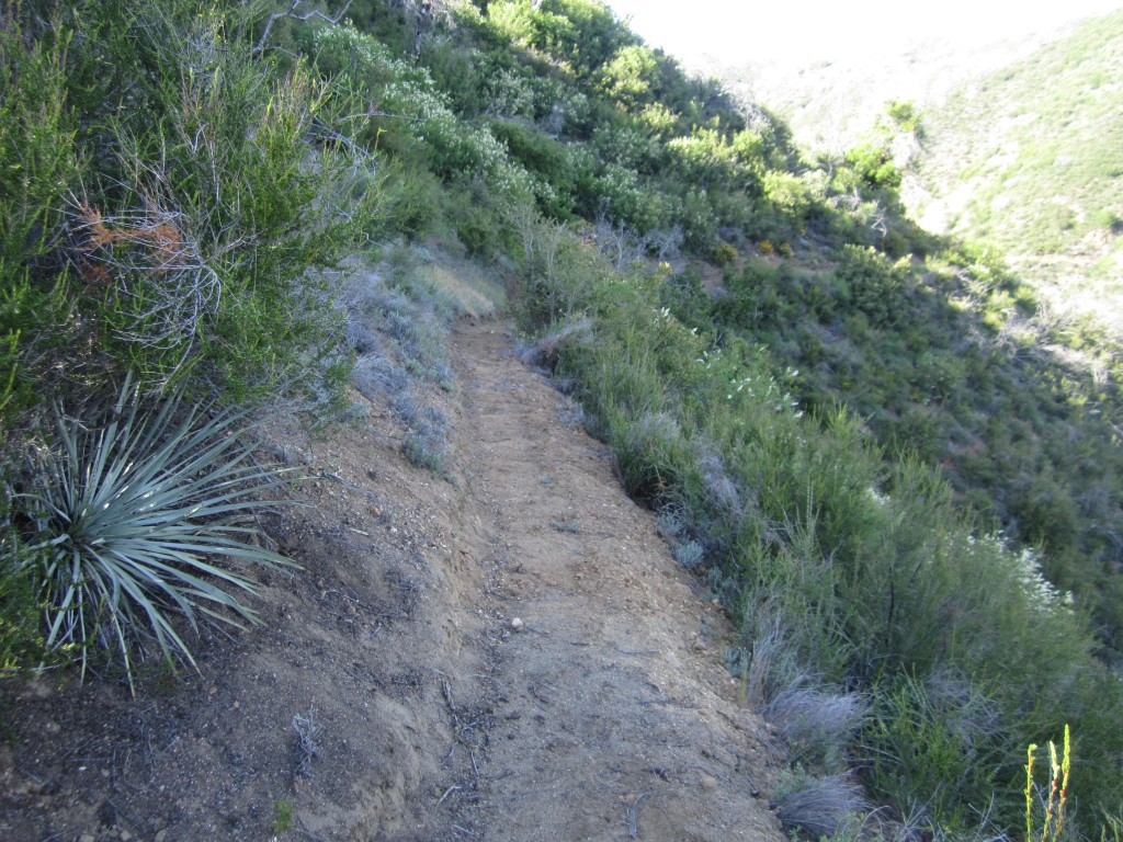 Recent trail work on the Marble Peak trail