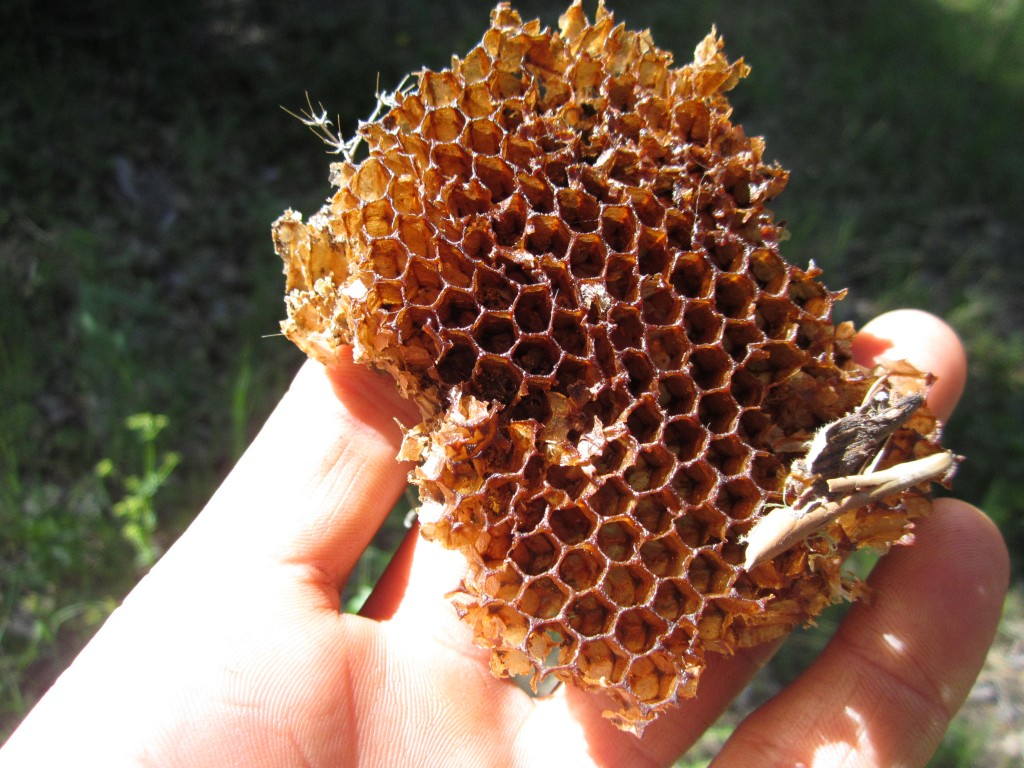 Honeycomb on the trail