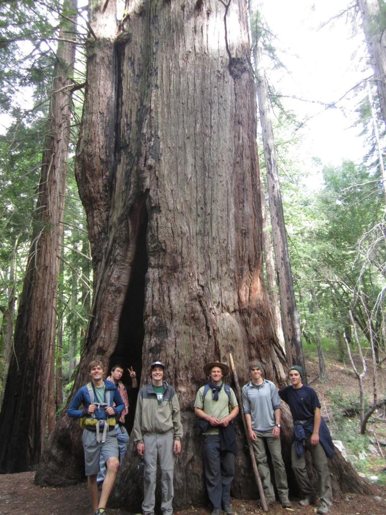 Big Tree pose