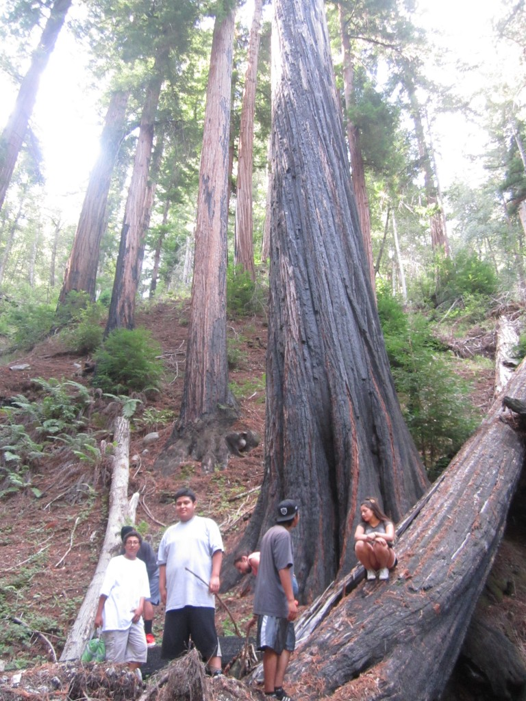 SCS students explore the old-growth redwoods of the Little Sur river valley